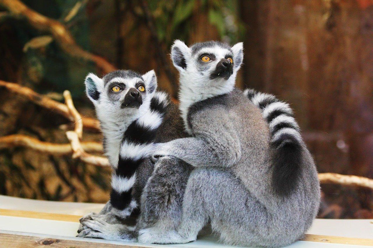 À la découverte du zoo de Beauval